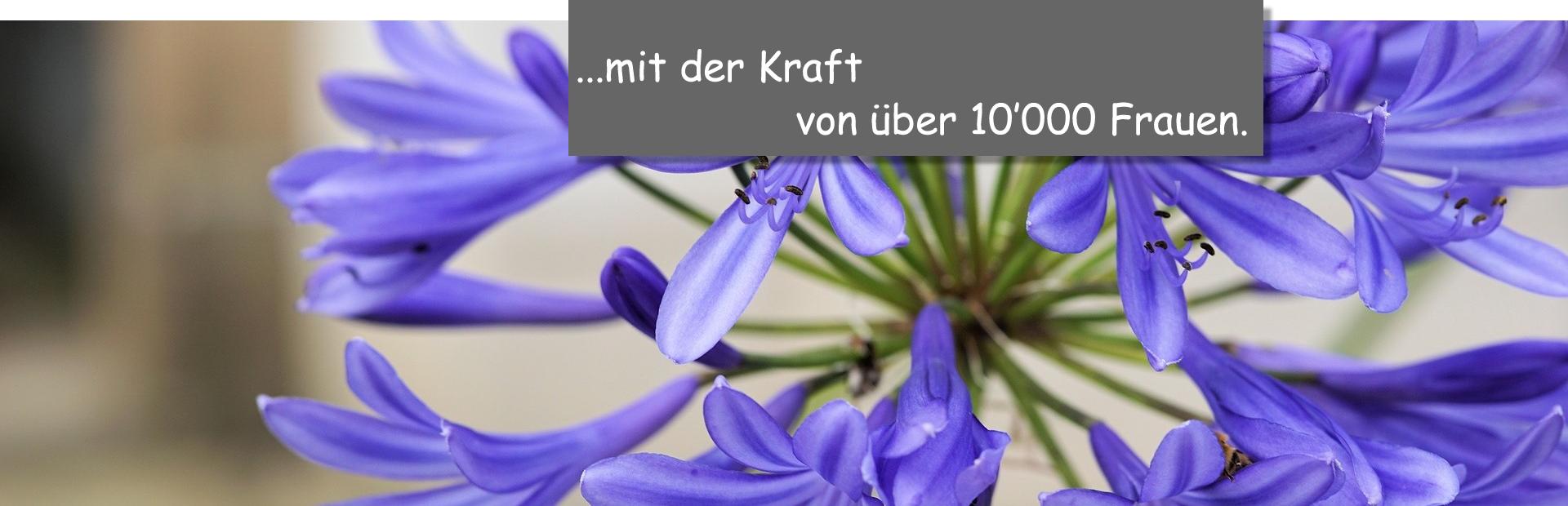 Agapanthus_Kraft