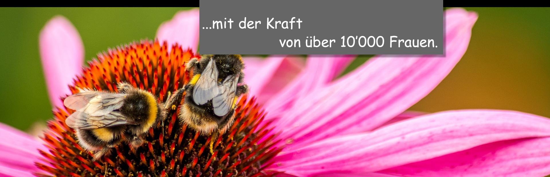 Hummel2_Kraft