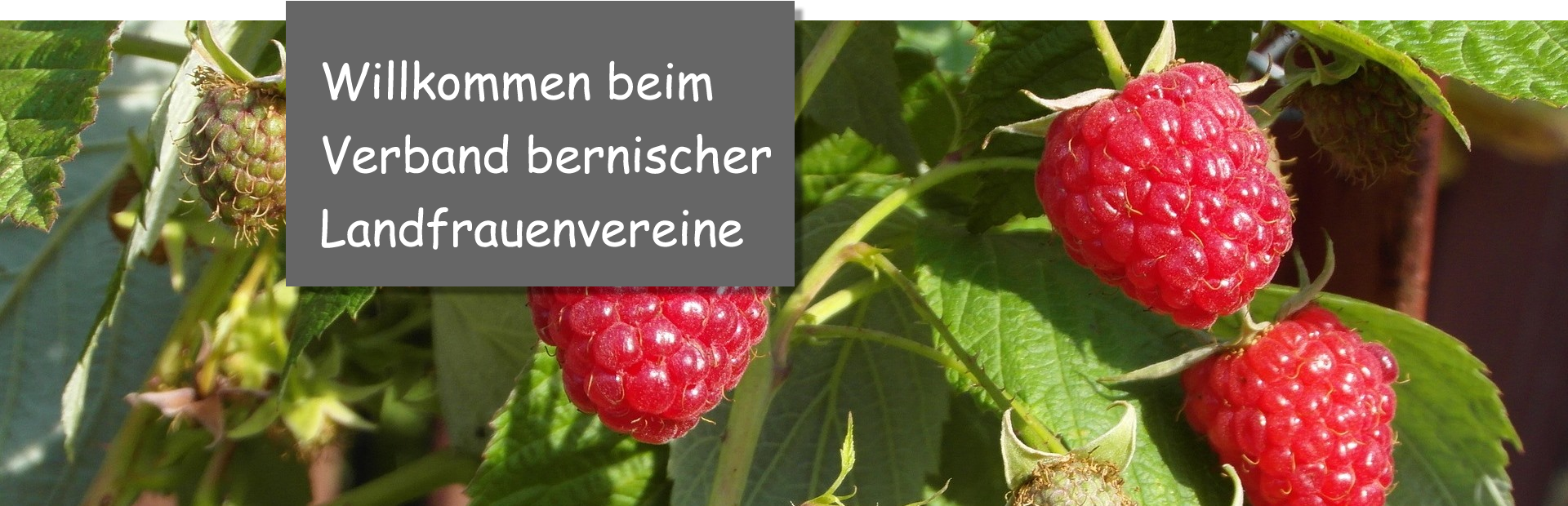 Himbeeren_willkommen