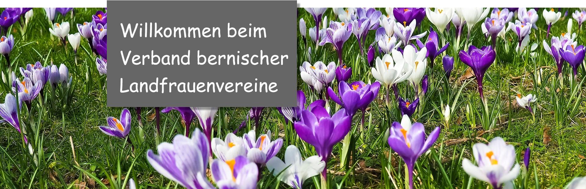 Krokusse_Willkommen