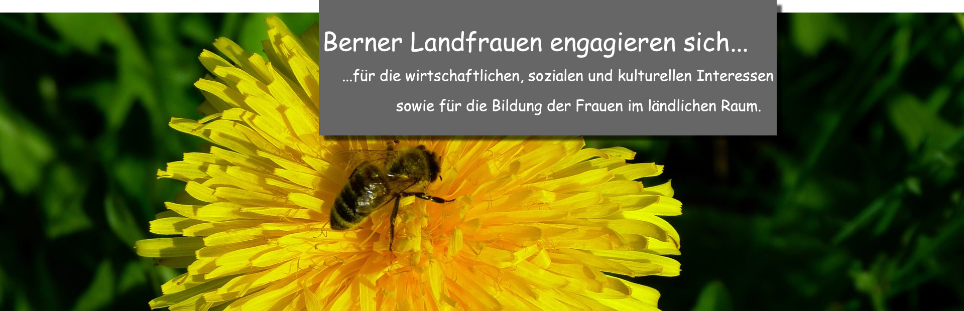 Loewenzahn_engag