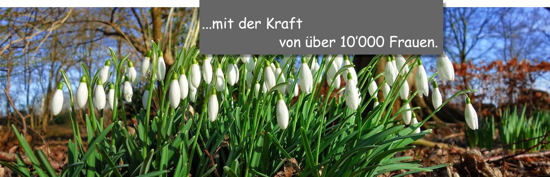Schneeglggli_mit_der_Kraft